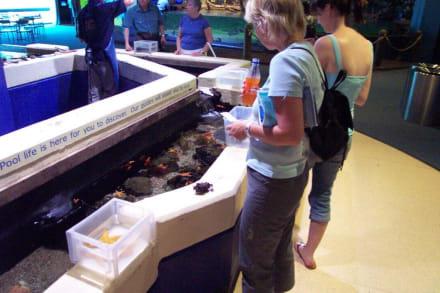 Seesternbecken - Melbourne Aquarium