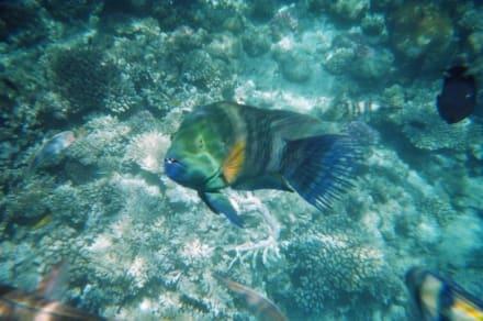 Am Hausriff - Schnorcheln Hausriff Bel Air Beach /Arabia Hurghada