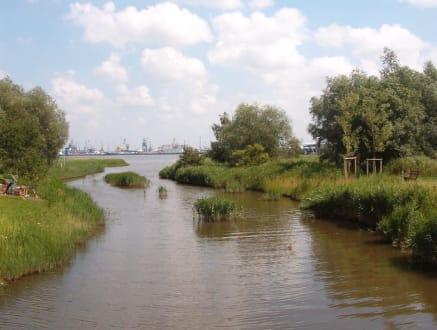 Blick zum Hafen - IGA Rostock
