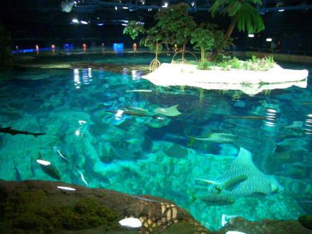 Ocean Park Hong Kong - Ocean Park