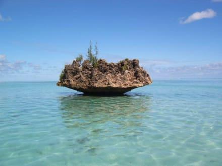 Ausflug zur Coconut-Island - Coconut Island & Korallenpilz Felsen