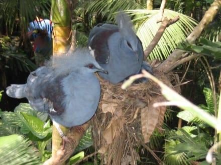 Ausflug: 3-Park-Safari (Jahn Reisen) Taubenart - Bali Bird Park