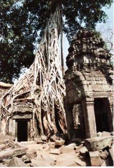Ursprünglicher Zustand - Tempel Ta Prohm