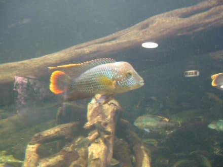Aquarium - Aquarium Wilhelmshaven