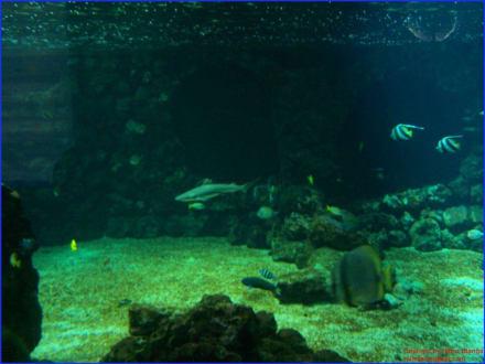 Haifischbecken - Marineland