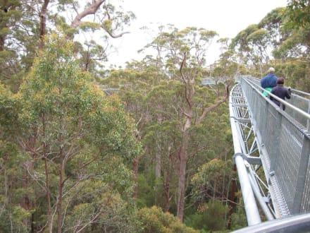 Tree Top Walk - Tree Top Walk