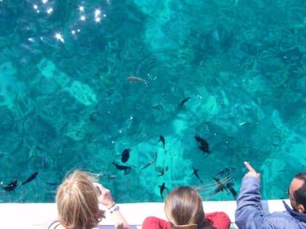 Glasklares Wasser - Schnorcheln Hurghada