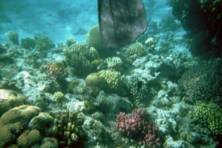 Unterwasserwelt in Hurghada - Schnorcheln Hurghada