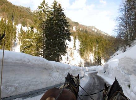 Schlittenfahrt im Allgäu - Pferdeschlittenfahrt Tiefenbach