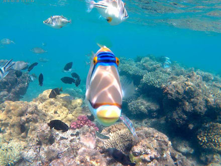 Am Strand beim Alf Leila wa Leila und Jungle Aqua Park  - Schnorcheln Hurghada