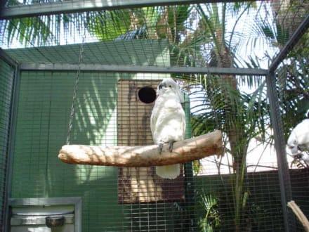 Papagei - Loro Parque
