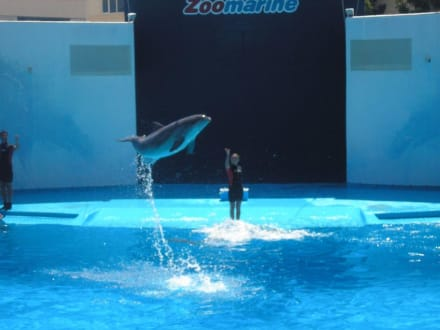 Dolphins in Motion Show - Matitimer Zoo Zoomarine