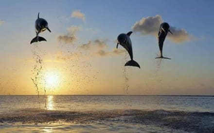 Delfine - AT-Touren Hurghada - Erlebe dein Ägypten!