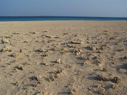 Strandansicht Giftun - Giftun / Mahmya Inseln