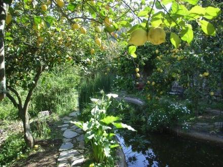 Garten der Galeria Porca Preta - Galeria Porca Preta
