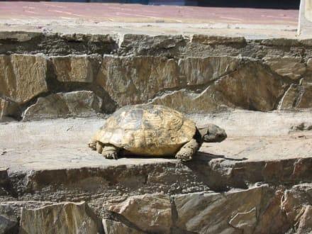 eine Schildkröte - Alanya Bazar