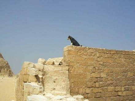 Wachund über die Stufenpyramide - Stufenpyramide / Pyramide von Djoser