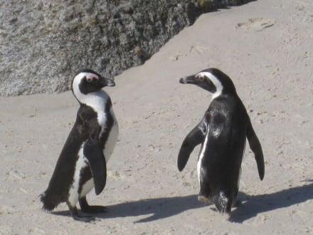 Pinguine - Boulders Beach