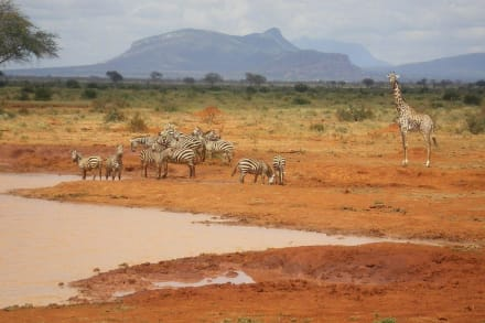 Safari - Tsavo West Nationalpark