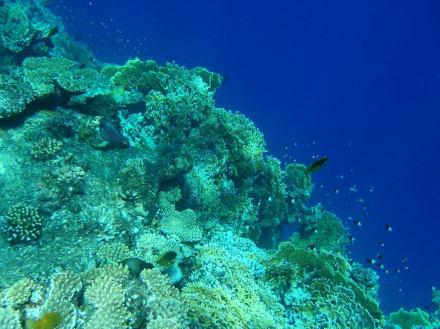 Unterwasserwelt 9 - Tauchen Marsa Alam