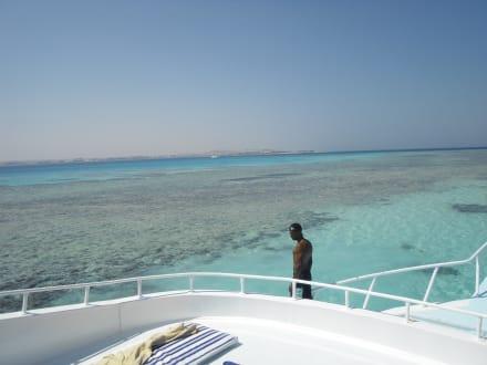 Sandbank aus Korallenmehl mit Riff! - Tiger Marine