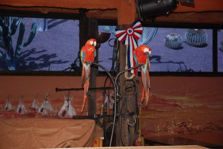 Papageienshow - Reitschule Rancho Texas