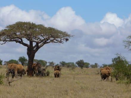 Elefantenfamilie - Tsavo West Nationalpark