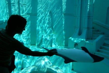 Aquarium - Sea World