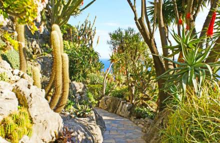 botanischer garten monaco monte carlo in monaco monte carlo holidaycheck. Black Bedroom Furniture Sets. Home Design Ideas