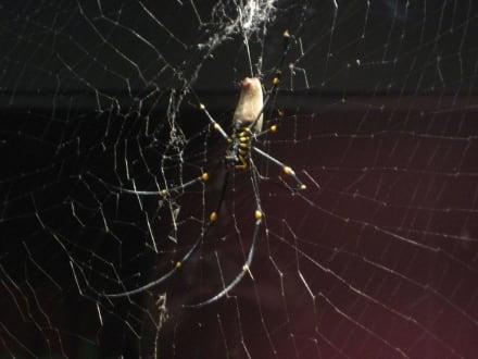 Spinnen - Wildlife World