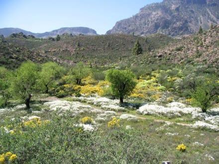 Frühling in den Bergen - Bergwelt