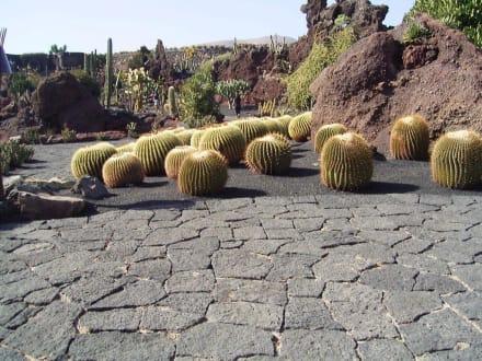 Kakteen - Jardin de Cactus / Kaktusgarten Guatiza