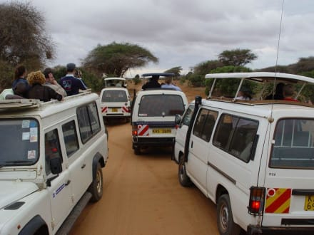 Jagdt nach dem besten Bild - Tsavo Ost Nationalpark