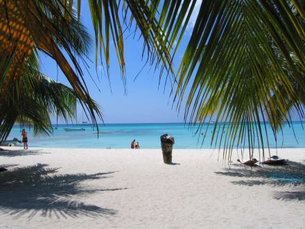 Traum Strand - Isla Saona