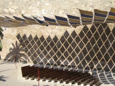 Sonne und Schatten - Kathedrale La Seu