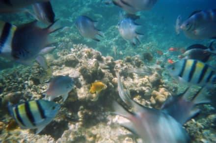 Wie im Aquarium! - Schnorcheln Hurghada