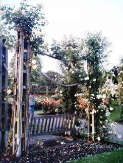 Queen Mary's Rosengarten im Regent's Park - Regent's Park