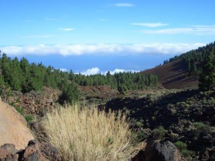 Blick vom Teide - Teide Nationalpark