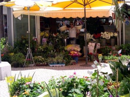 Blumenmarkt - Blumenmarkt