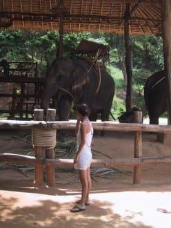 Elephanten Trekking - welcher solls denn sein? - Khok Chang Kata Safari