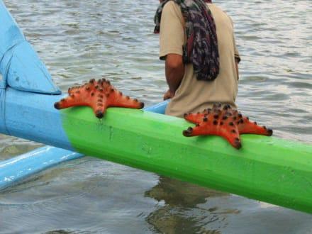 Bildansicht - Westküste Lombok