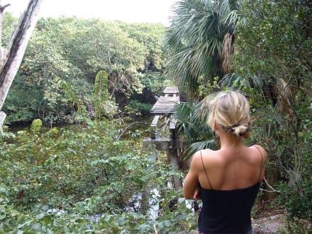 Im Park - Biscayne Park Miami Shores