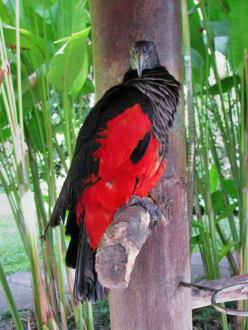 Exotische Vögel 1 - Reptilien- und Vogelpark