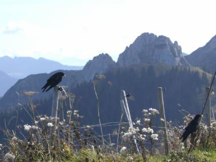 Bergdohlen,Setzberg,Blick auf den Risserkogel - Wallberg