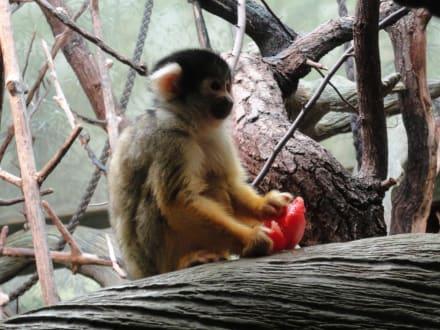Frankfurter Zoo - ein Besuch lohnt sich - Zoo Frankfurt