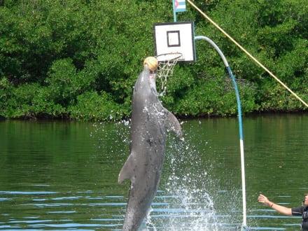 Delfin beim Basketball.. - Delfinarium Varadero