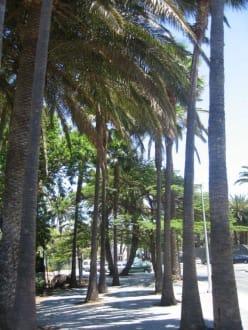 Palmen - Shoppingcenter Boulevard El Faro