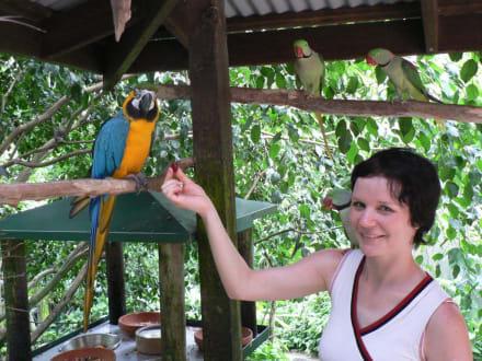 Trauben für die Birdworld-Bewohner - Birdworld Kuranda