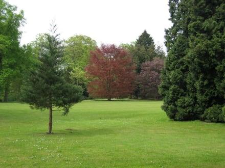 Baumgruppe - Villa Hügel