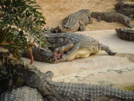 Krokos - Djerba Explore Parc